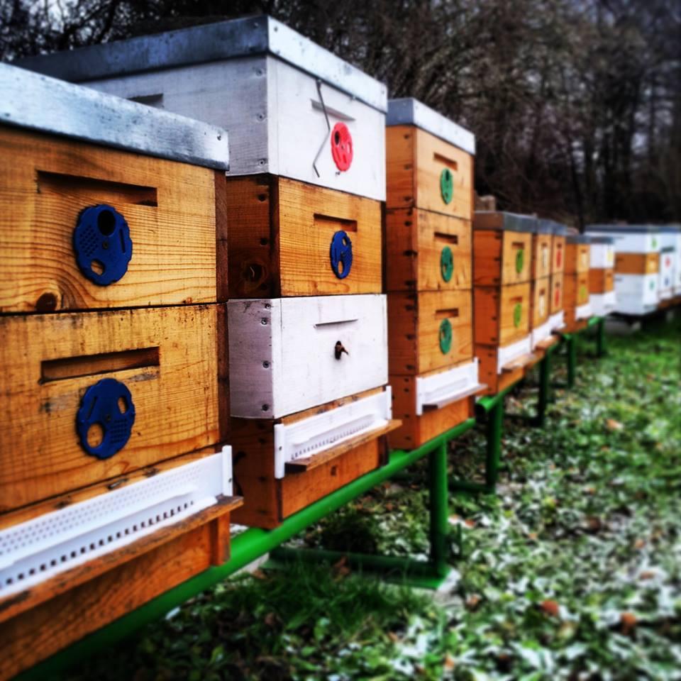 trenčianska medovina včely