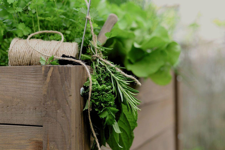 bylinky na chudnutie